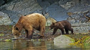 Approximately 1,850 grizzlies remain in the Lower 48 states.
