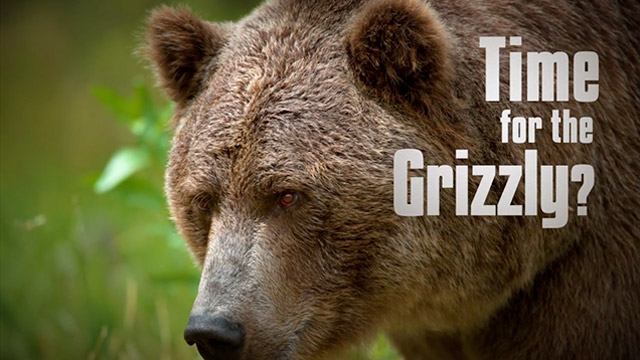 Time for the Grizzly? video screenshot