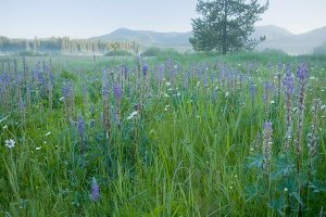 Image of wildflowers at Vital Ground's Bismark Meadows Project in North Idaho