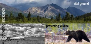 Image collage of grizzly and landscapes. Displaying how Vital Ground connects landscapes.