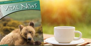 Image of Vital News magazine and a cup of coffee.