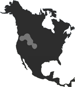 Outline map of North America highlighting the area where Vital Ground works.