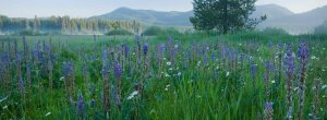 Vital Ground Habitat Projects - field of blue flowers