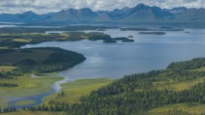 The Bristol Bay Heritage Land Trust and Vital Ground partnered to protect brown bears and chinook and coho salmon in Southwest Alaska.