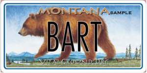 Monte Dolack Great Bear Montana license plate - Bart the Bear edition