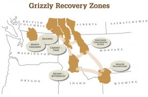 Grizzly Bear Recovery Zones map
