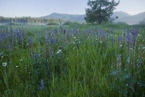 Bismark Meadows wetlands - by Linda Lantzy