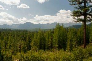 Cabinet Mountains by Lance Schelvan