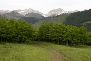 Photo by Lance Schelvan of ranch road on the Rocky Mountain Front