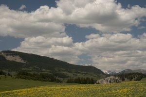 Lance Schelvan photo of Rocky Mountain Front meadow