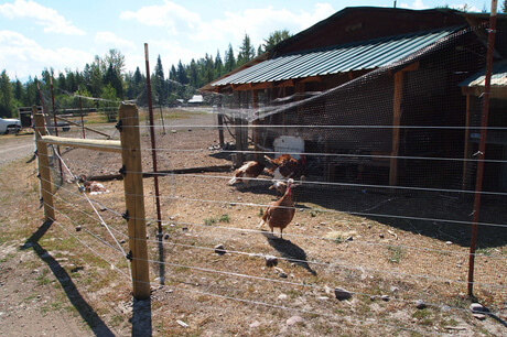Photo by Adam Lieberg of electric fence and chickens in the Swan Valley