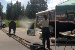 Photo by Danielle Oyler of wildlife professional demonstrating proper bear spray use