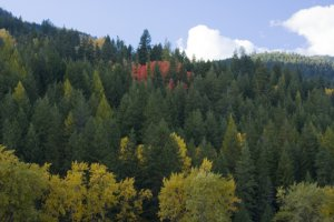 Fall colors in the Selkirk Mountains, by Linda Lantzy