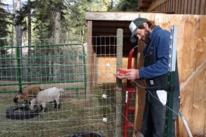 Photo of Swan Valley Bear Resources' Luke Lamar installing electric fencing to prevent bear conflicts
