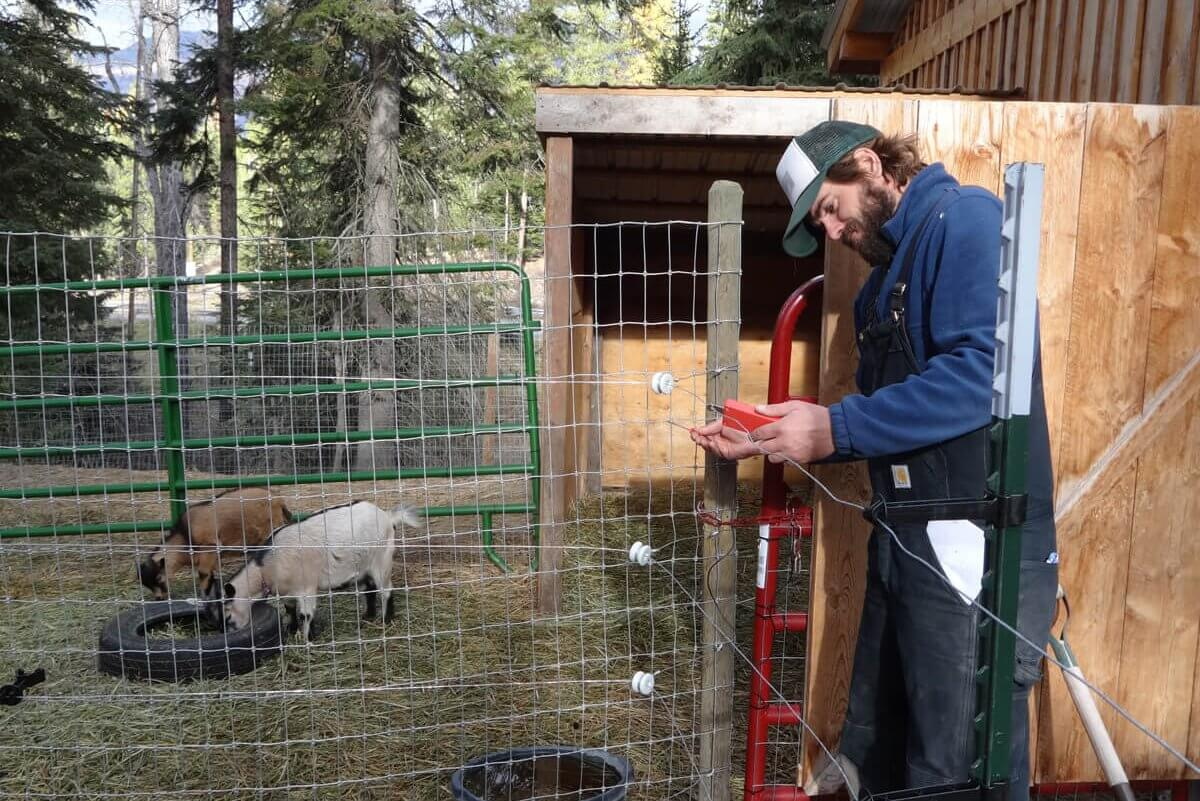 Photo of Luke Lamar from Swan Valley Bear Resources setting up an electric fence for domestic goats in the Swan Valley