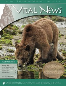 Vital News - Spring 2017 image of Newsletter (PDF)