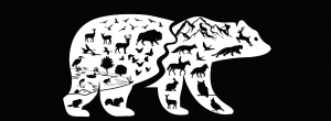Grizzly bear umbrella species graphic
