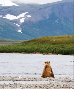 brown bear sitting along lake