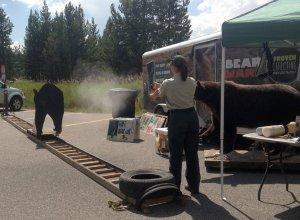 Bear Spray demonstration