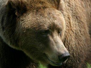 The original Bart the Bear