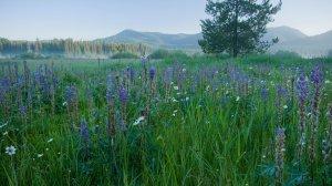 Bismark Meadows wetlands