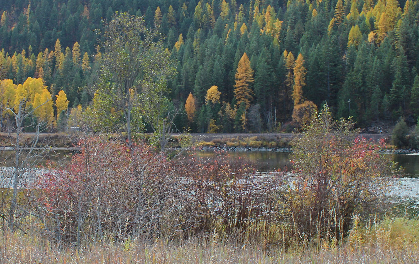 Forest in fall with river; Vital Ground's Wild River Projec