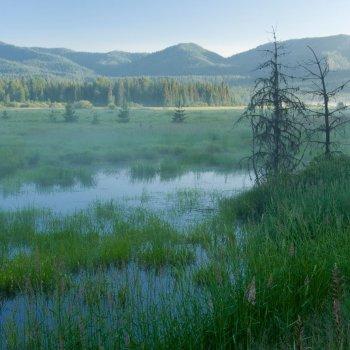 Bismark Meadows in northern Idaho