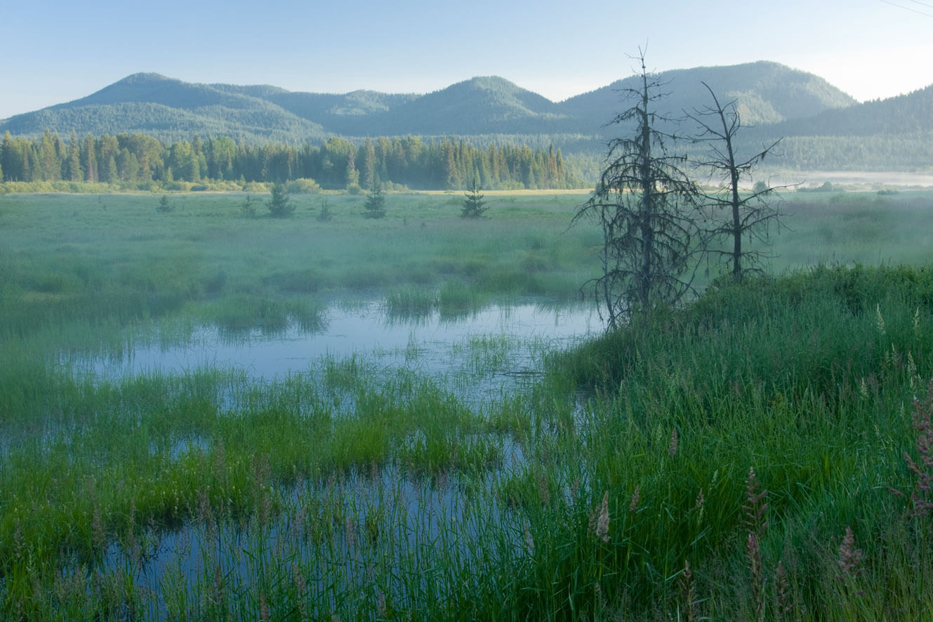Bismark Meadows in northern Idaho
