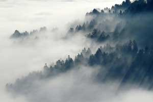 Foggy forested mountain; join grizzly council