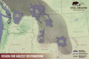Vision for grizzly restoration