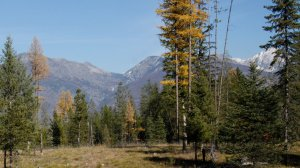 Mission range and yellow larch trees from Elk Flats area