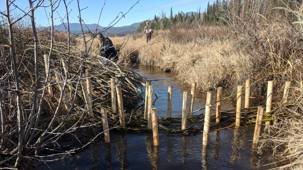 Bismark Meadows beaver dam analogue