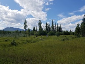 Whitefish Range from Glacier Gateway project