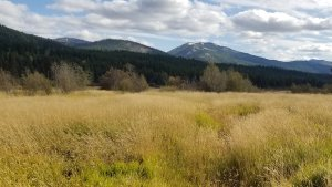 Broadie Habitat Preserve