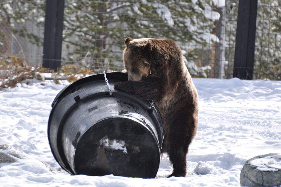 Grizzly and bear-proof bin