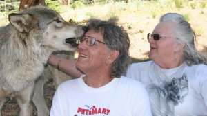 John and Peggy Tagesen meet a wolf at a rehabilitation center