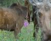 Moose by Lance Schelvan