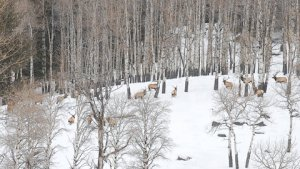 Read the latest news from Vital Ground - image of elk