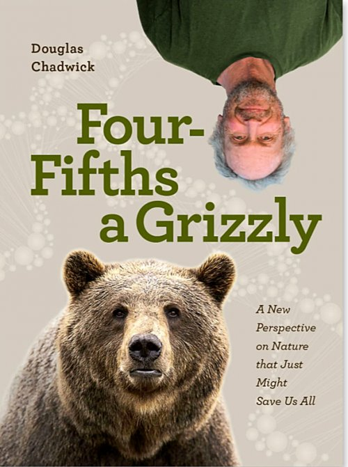 Four fifths of a grizzly by Doug Chadwick